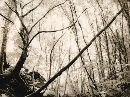 Appuntamento al buio / Gruppo di Resistenza Analogica Fotografi Romamor